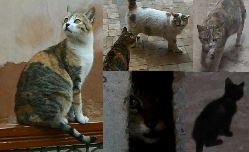 Cats_in_Marrakech