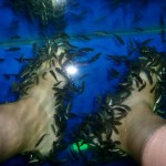 Cost of living in chiang mai family style wagoners abroad for Fish pedicure price