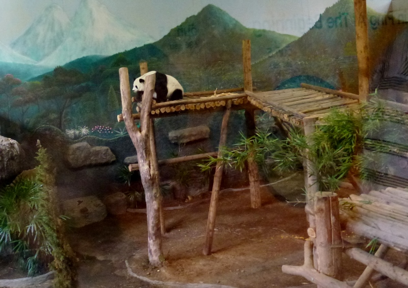 Chiang Mai Zoo and Aquarium Panda